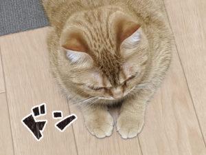 02肉球 DesignerM 宮本まさのぶ